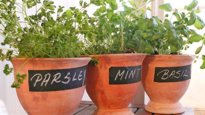 Apartment Indoor Garden How to start an indoor garden in your apartment workwithnaturefo